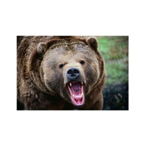 Sabre Frontiersman Bear Spray Attack Deterrent перцовый спрей (6)